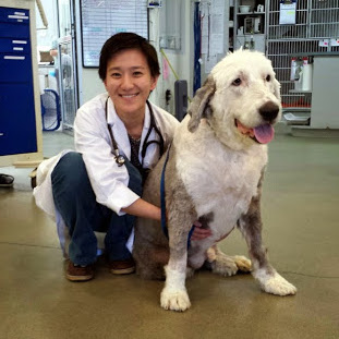 Old English Sheep Dog Bodie with Dr. Stephanie Wan