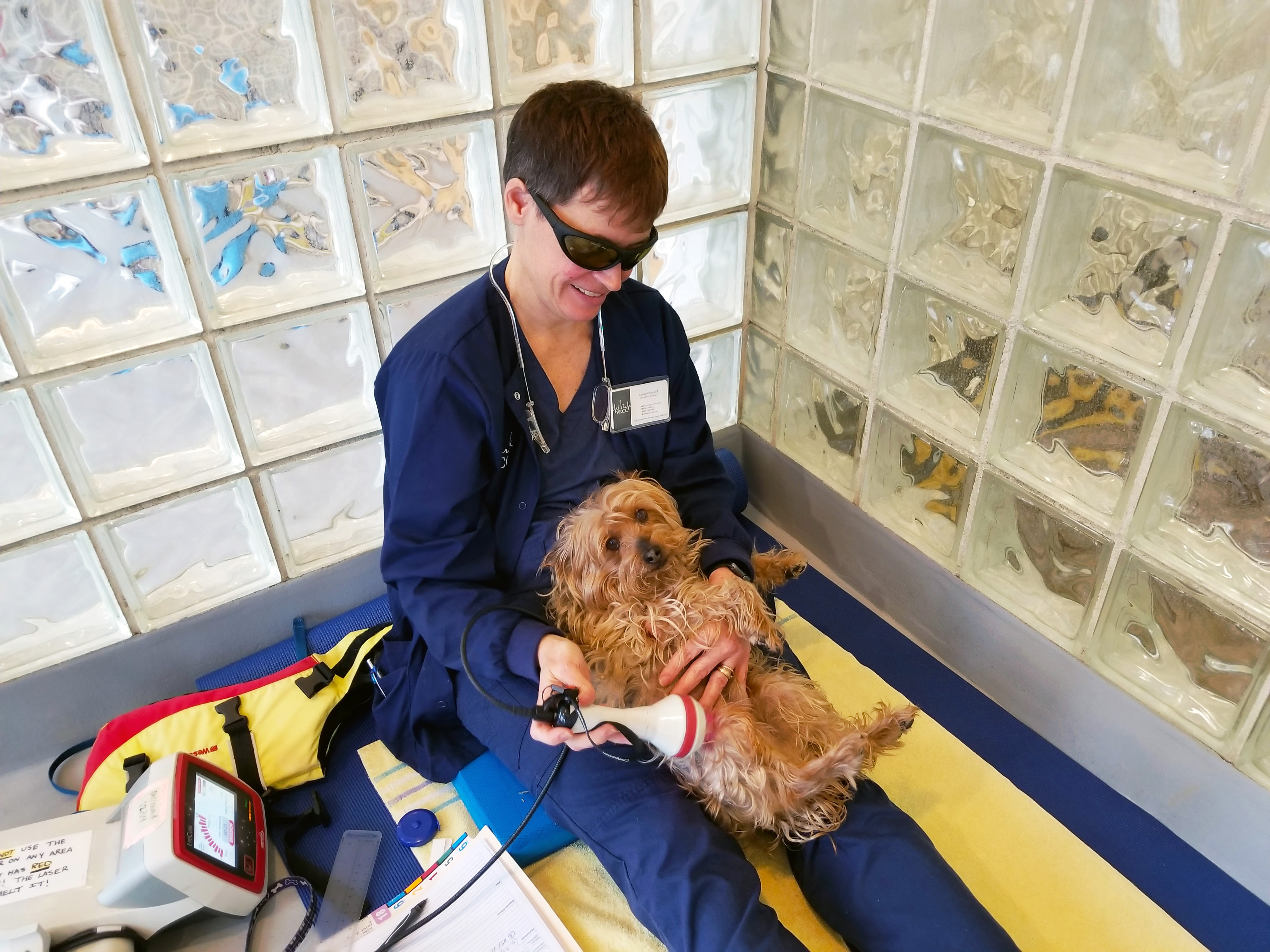 Karen Grove performing laser therapy on a yorkie patient