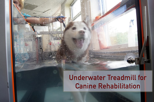 Cheyenne in the underwater treadmill